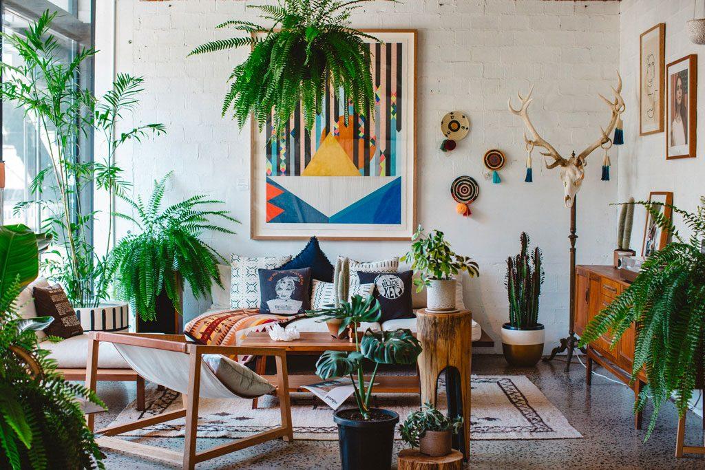 rinnovare-casa-primavera-piante-appartamento-piazzetta