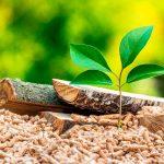 sostenibilità-riscaldamento-biomassa-piazzetta