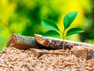 Giornata mondiale dell'ambiente 2021: la sostenibilità del riscaldamento a biomassa